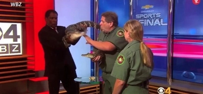 Alligator Makes TV Anchor Freak Out On Live Television!
