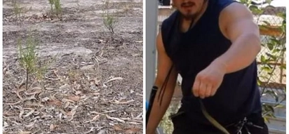 Can you see it? Snake catcher challenges his fans to spot venomous reptile in plain sight, they can't