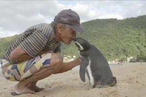 Un pingouin nage 8000 Km pour se réunir avec l'homme qui l'a sauvé