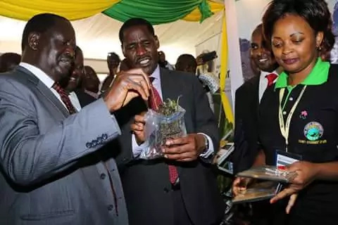 Raila enjoys Miraa in Meru with Peter Munya