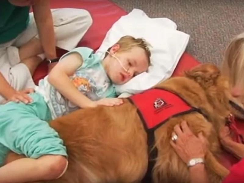 Su hijo tiene daño cerebral y le llevaron este perro ¡Es increíble lo que pasó!