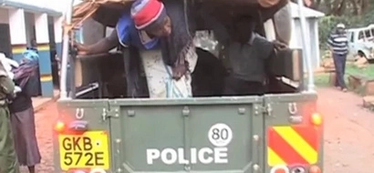 Granny Arrested With Over 700 Rolls Of Bhang In Limuru