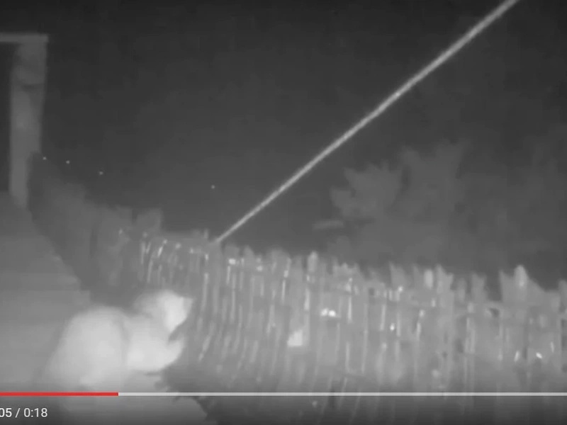 En video, quedó registrada una especie desconocida en Envigado
