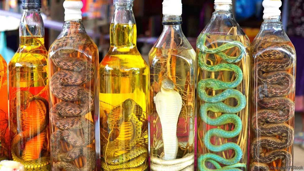 This Is Shocking Method How Chinese Make 'Snake-Wine'
