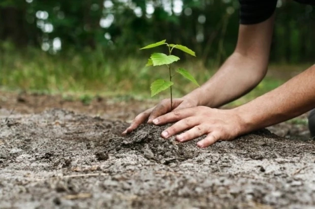 Tree planting will save world from climate change – Environmentalists