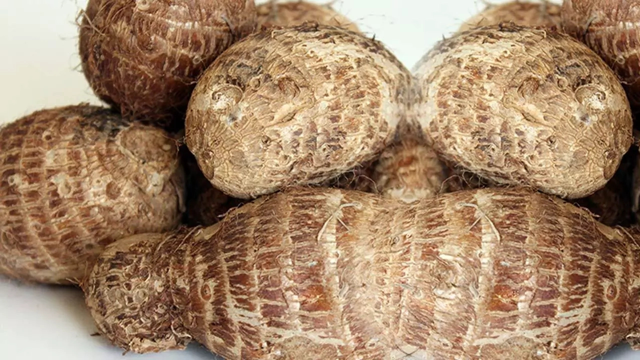 Steps To Start Cocoyam Business In Nigeria