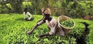 Farming in Nigeria, Overview, Benefits, Challenges, Prospects