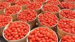 8 Economic Importance of Tomatoes in Nigeria
