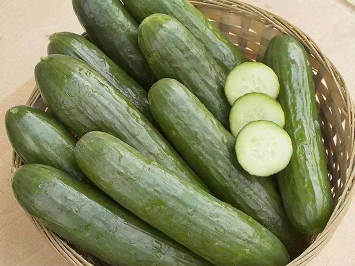The Health Benefits of Cucumber include