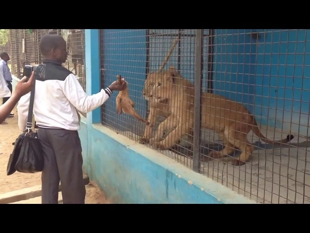 How to Start a Zoo in Nigeria