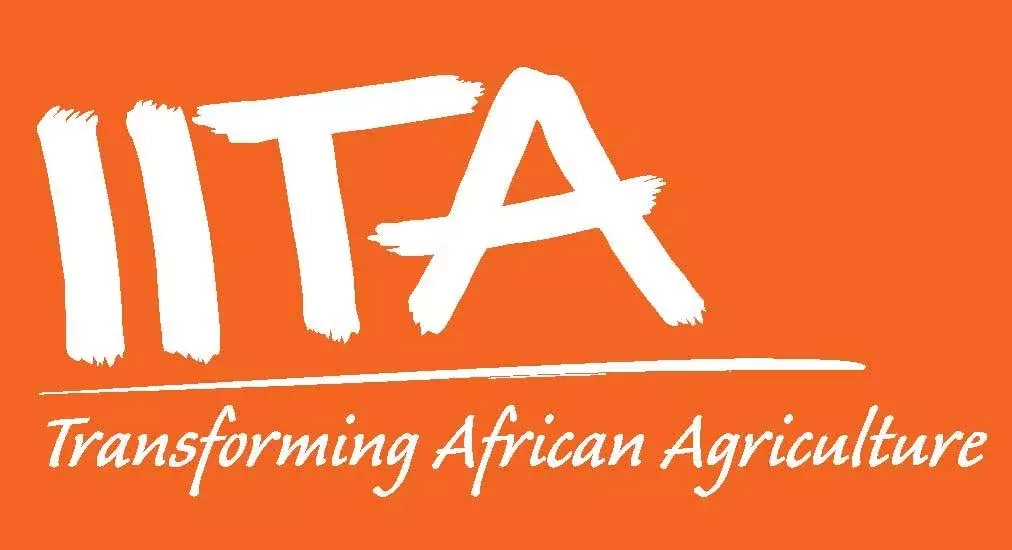 Cassava Breeder Postdoctoral Fellow needed at IITA, Ibadan 2018
