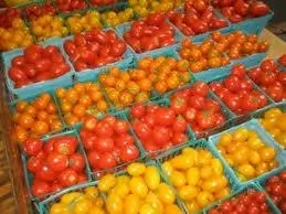 7 Varieties and Types of Tomatoes Grown In Nigeria