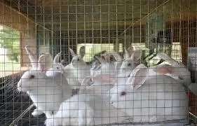 How to Start Rabbit Farming in Nigeria