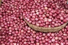 How to Start an Onions Business in Nigeria
