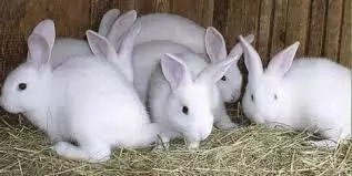 10 Steps to Start Rabbit Farming in Nigeria and Tips to Succeed