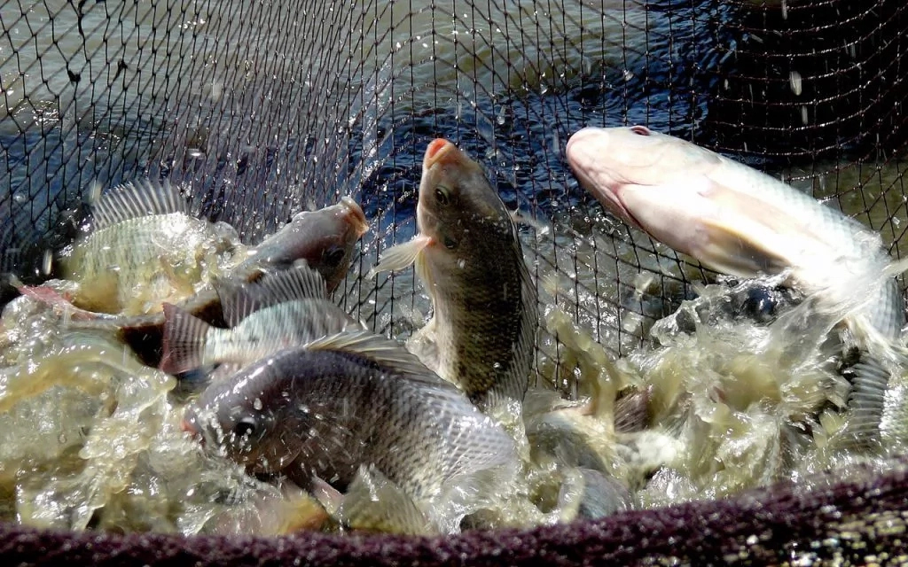 Importance of Fishery in Nigeria