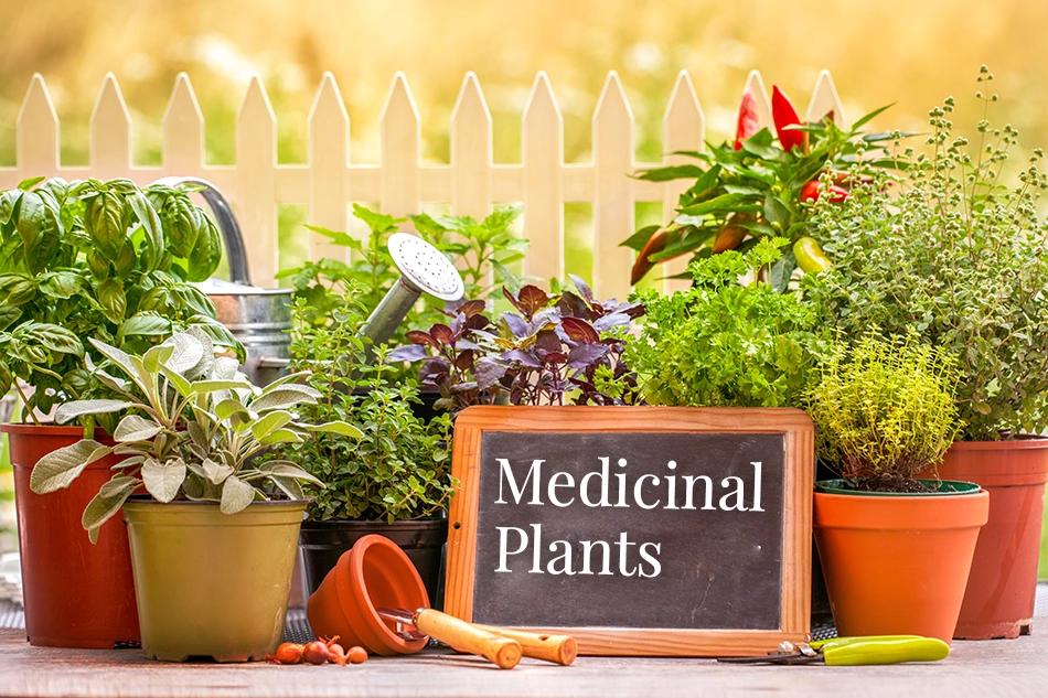 Top Medicinal Plants and Herbs