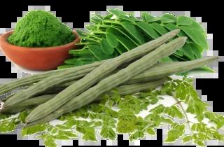 Health Wonders of Moringa