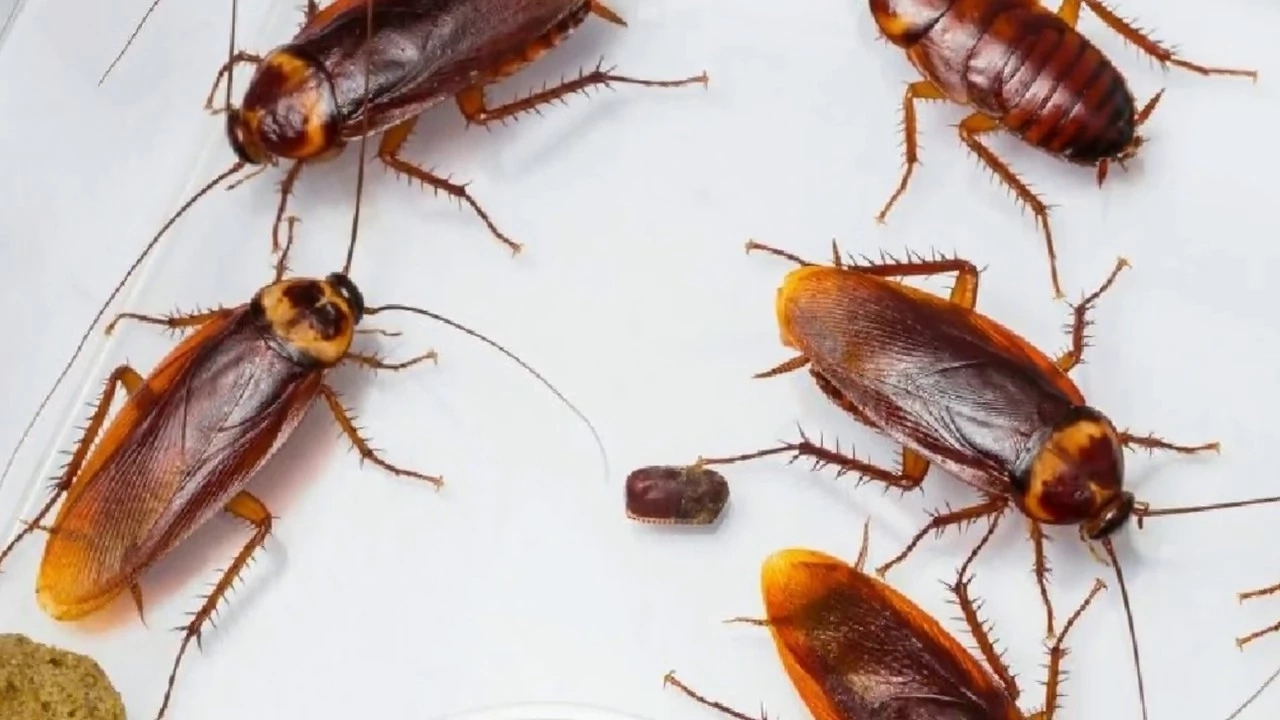 How to Get Rid of Cockroaches in Nigeria