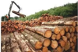Hoq To Start Wood Processing Business In Nigeria