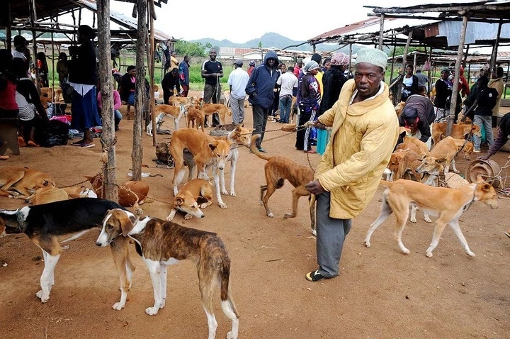 How to Start a Dog Business in Nigeria