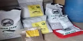 6 Steps to Produce Fish Feed in Nigeria