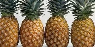 Steps To Start Pineapple Business And Tips To Succeed (do not publish)