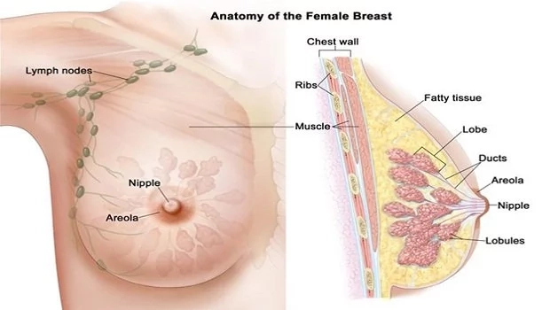 See The 5 Warning Signs of B.reast Cancer That Many Nigerian Women Ignore! |8+ PLS
