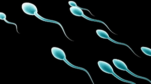 Solutions to Low Sperm Count in Nigeria