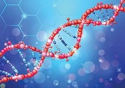 Genotype and Genetic Compatibility in Human and Organisms